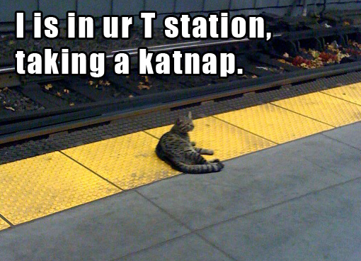 kenmore cat train mascot pic