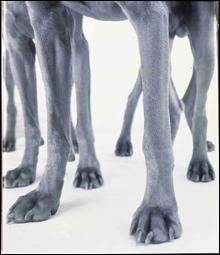 070413_inside_dogs