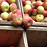 dinnermovie_apple2_list