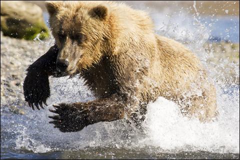 1006_bears_main