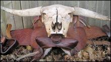 061206_inside_bull