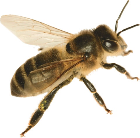 bee-havior