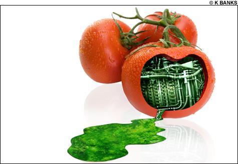 09026_tomato-Main