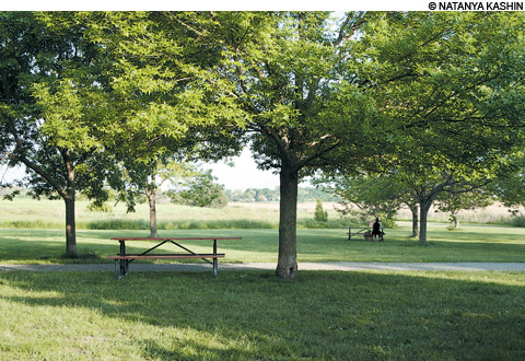 picnics in boston at Belle Isle Marsh Reservation