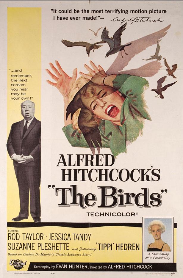 birds2