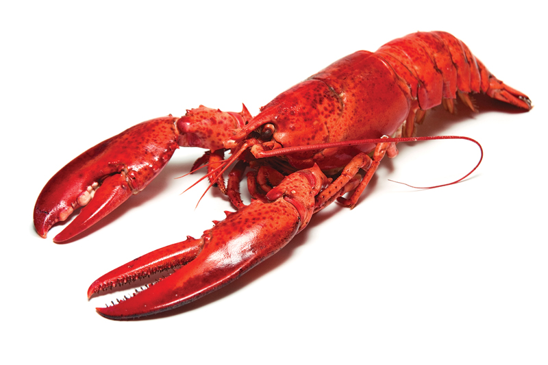 SummerDIYfood_lobster2_main