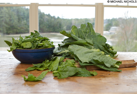 food_collards_main