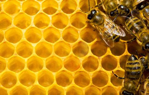 main_Bees_480