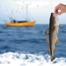 HandHoldingFish_list