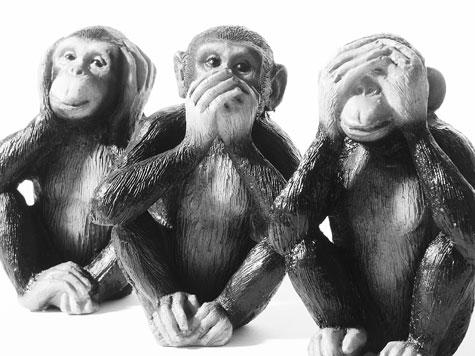monkey main