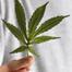 Marijuana_list060812