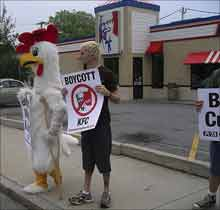 LIMPING BISCUITS Injured chicken protests.
