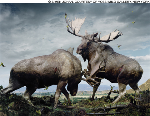 Untitled-133,-2005-(Moose)2